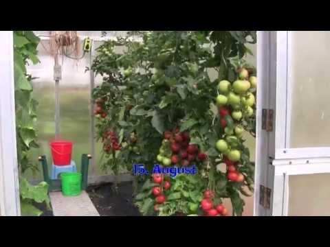 Mein Gewächshaus-Sommer Teil 2 (Gewächshaus & Hochbeet Perfekt! Film 15)