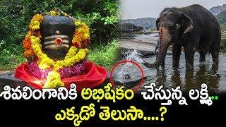 శివలింగానికి అభిషేకం చేస్తున్న లక్ష్మి   ఎక్కడో తెలుసా ? | Lord Shiva | Lord Vinayaka | HampiTemple