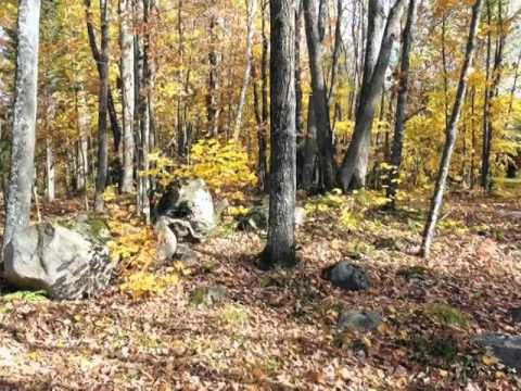 Homes for Sale - 5 ACRE ON COUNTYROAD G PELICAN LAKE WI 54463 - Renee Irish