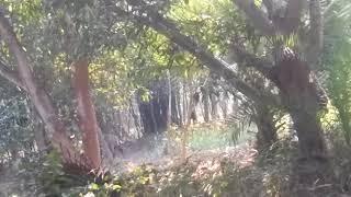 Bihar Animals jungle animals in the name Saura