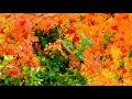 Золотая осень В Приходько mp3