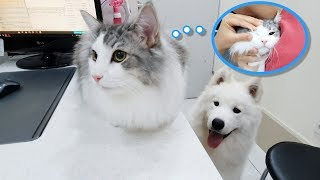 My pet's medical check-up : What the heck did a vet put in my cat's eye..!!