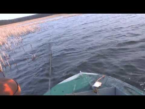форум краснооскольских рыбаков