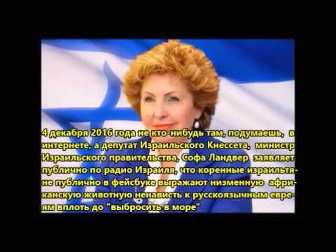 Животная ненависть коренных израильтян к русскоязычным евреям в Израиле