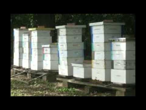 Worlds Bees are dying off & then so will we with no food. A FACT. Is it a NWO plan or natural?