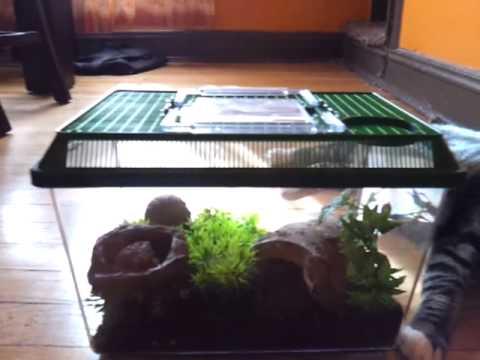 Orange Baboon Tarantula Web Orange Baboon Tarantula Tank