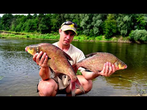 рыбалка фидером в украине видео