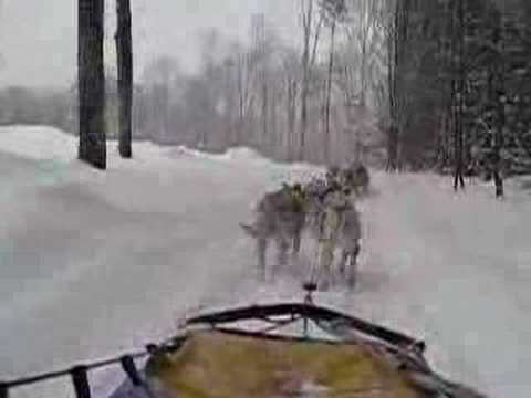 Dog Sled ride on the bush trails Huntsville, Ontario Video