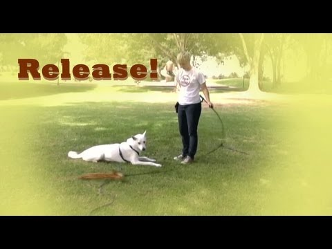 0 Adding a release  clicker dog training tricks