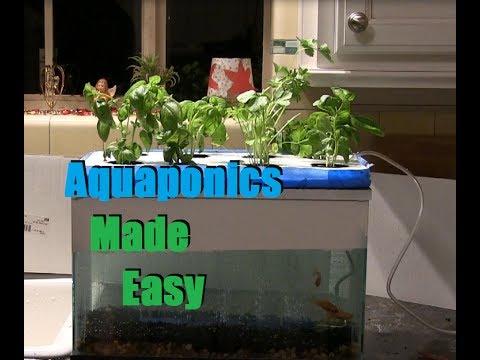 Cheap and easy 35 aquaponics hydroponics setup youtube for Hydroponic aquarium with fish
