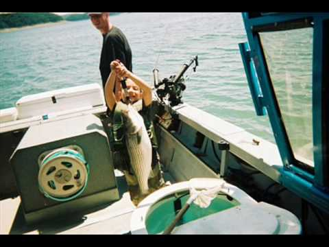 lake Cumberland Striper Fishing - Striper fishing Guides Kentucky Lake cumberland