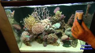 WEEKLY Reef care in your Aquarium REDSEA MAX
