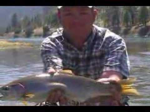 montana trout fishing on Madison, Yellowstone, Missouri rivers