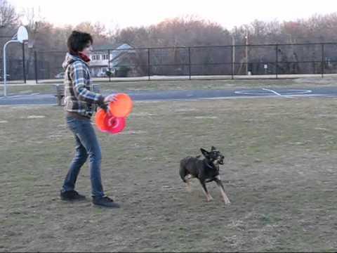 Perros - Tremendo entrenamiento canino