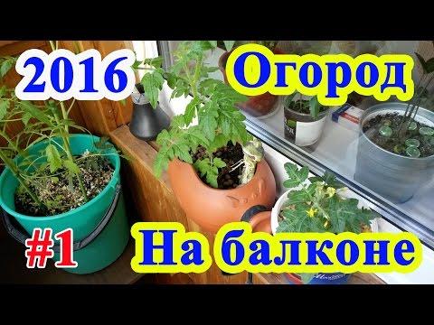 Огород на балконе 12.05.16