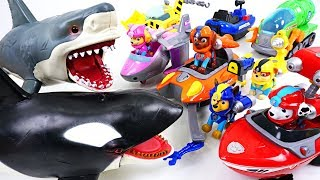 Killer whale and shark is attacking! Go! Paw Patrol Sea Patrol pub heroes! - DuDuPopTOY