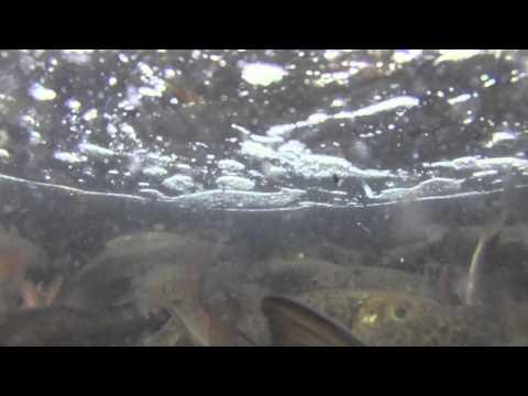 Fish stocking for Zetts fish farm