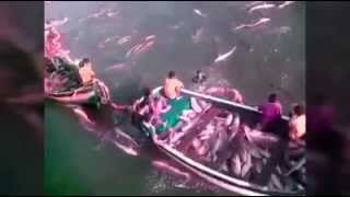 Amazing Fishing Is Awesome Best VEDIOS High Quality