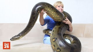 25 Abnormally LARGE ANIMALS That Really Exist
