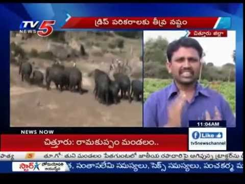Elephants Attacks On Agriculture Fields In Chittoor : TV5 News