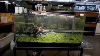ADA Aquarium Setup, Step by Step Guide Part 3