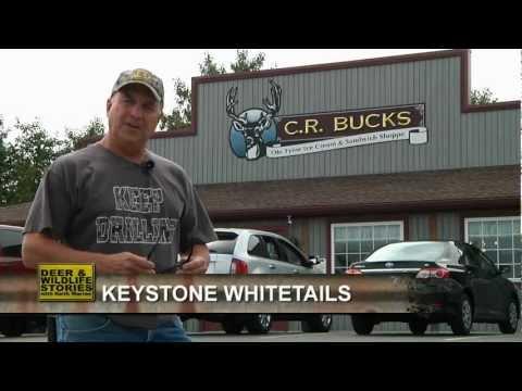 Keystone Whitetails | Deer & Wildlife Stories