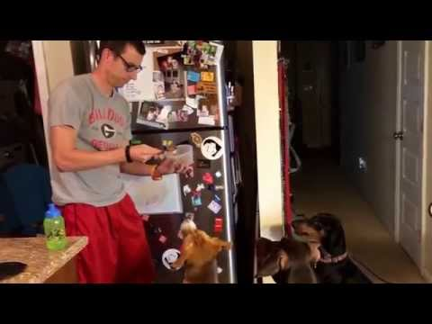 Dogs go nuts for canned dog food
