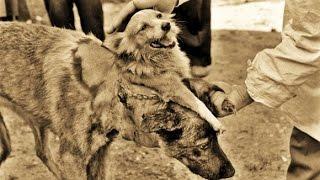 11 Weirdest Animal Experiments