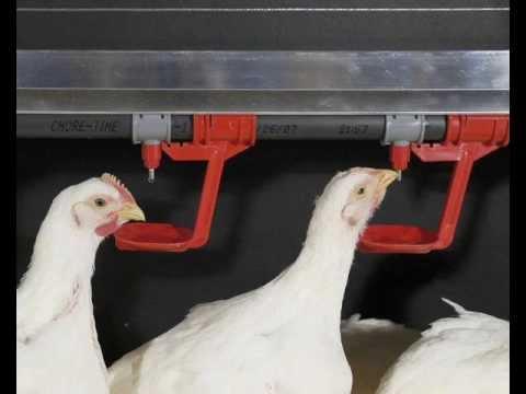 Поилки кормушки для кур и цыплят