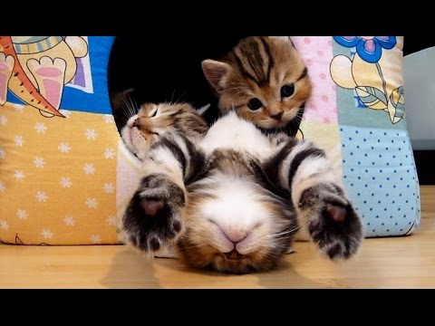 Funny and Cute Kittens Falling Asleep  | Funny Cats Compilation