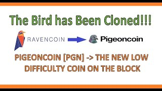 HOT! New Bird on the Block - PIGEONCOIN PGN / PIGEON COIN -x16s algo