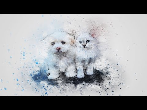 Funny Cats and Dancing Dogs😻🐶 Compilation Vines 2018-#102