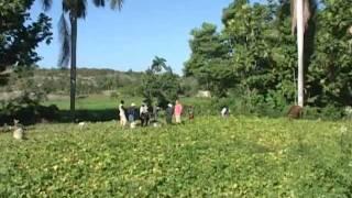 Desarmes in Haiti by La Bonne Nouvelle