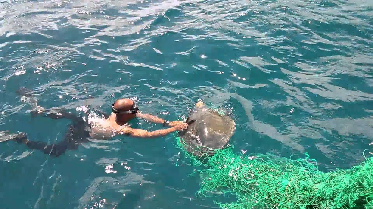Biologia Marinha Wallpaper Salvamento Tartarugas Marinha