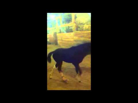Rita over 20 days post surgery: Heart of Phoenix Equine Rescue