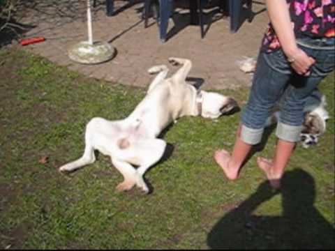 Dog Training - How to teach your dog: PLAY DEAD