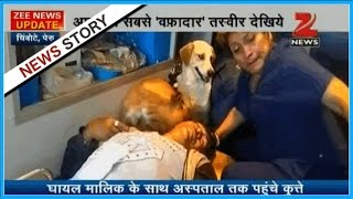 Man suffers the injury in the road accident, loyal dogs accompany owner till hospital