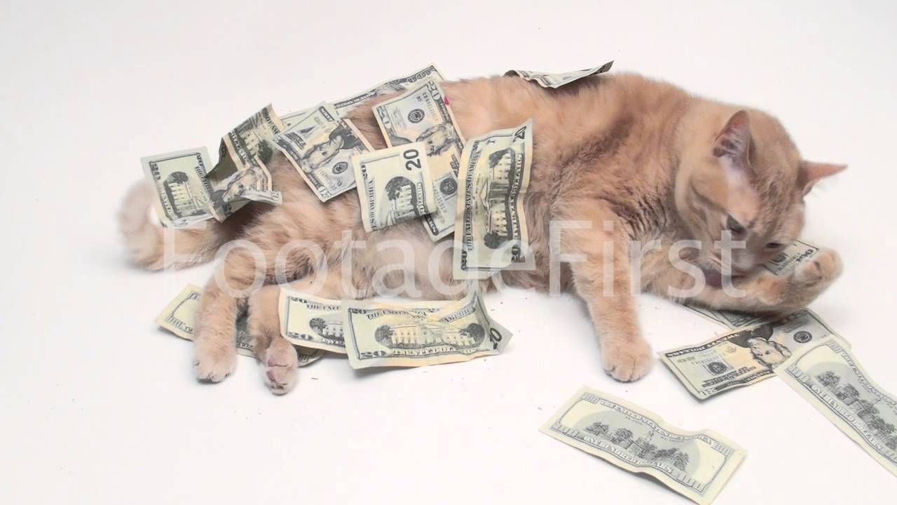 Cats Rolling in Money Fat Cat Rolls Around in More