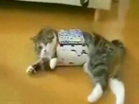 Fat Cat Fail Fat Cat Small Box Fail
