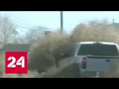 Сорняк из России превращает США в пустоши - Россия 24
