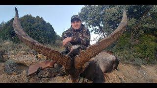 Mega Becite Ibex Hunting Spain Caza #goldentrophyshuntingclub Steinbock Jagd Spanien 308 Win Hornady