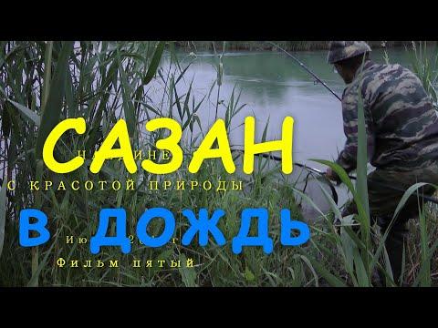 рыбалка на сазан в камышах