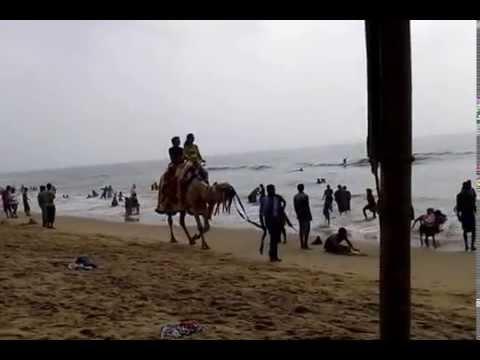 Marvelous experience of camel riding, Puri, Odisha