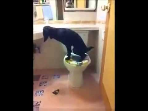 Собаку приучили к туалету