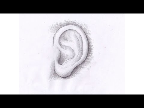Видео как нарисовать уши карандашом поэтапно