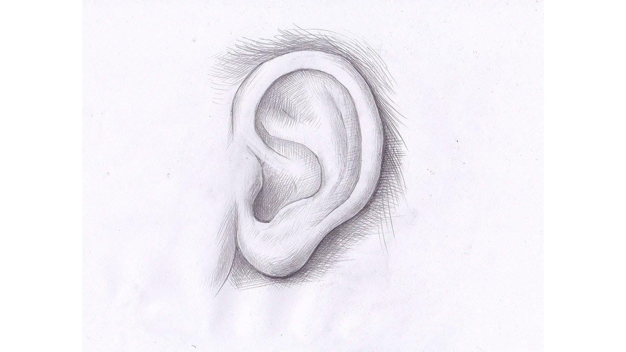 Как рисовать ухо карандашом