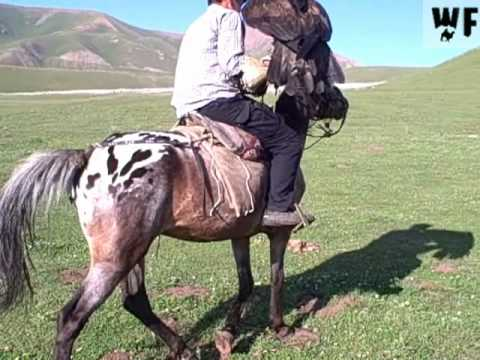 Kazakhstan & Kyrgyzstan - Celestial Mountain Action Adventure