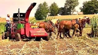 Amish Farmer with 8 Horse Hitch Chopping Silage