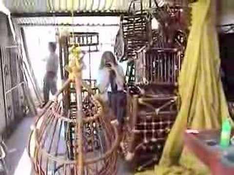 - Muebles de bambu ...
