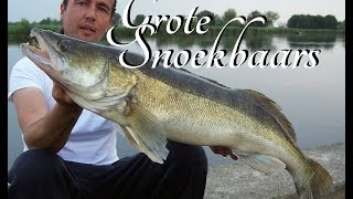 Grote snoekbaars op kunstaas - Fishing with lures for big zander